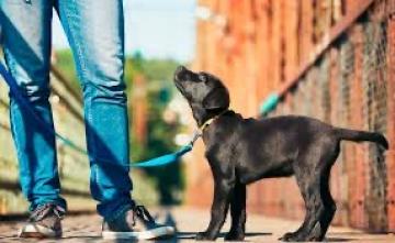 Junghunde Mainhattan Dogs